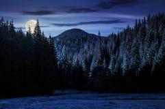 山的云杉的森林在晚上 库存照片