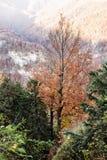 山的五颜六色的森林,秀丽本质上 免版税库存照片
