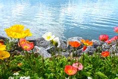 山的从堤防的花和日内瓦湖在蒙特勒 库存图片