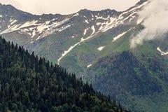 山的倾斜的森林 库存照片