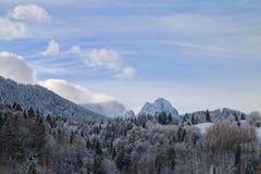 山的倾斜的积雪的森林 免版税库存照片