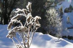 山的倾斜的草甸 免版税库存照片