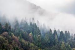 山的倾斜,报道用云杉的森林 免版税库存照片