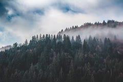 山的倾斜,报道用早晨雾的云杉的森林 免版税库存照片