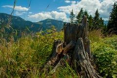 山的全视图与树桩的 库存图片