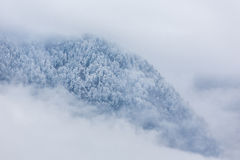 山的冬天森林 免版税库存图片