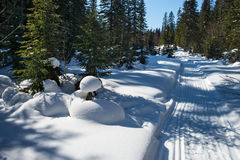 山的冬天森林 库存图片