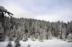 山的冬天森林 免版税库存照片