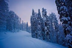 山的冬天森林 免版税图库摄影