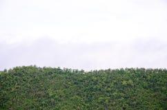 山的前面的森林在雾和低云彩的;Srinakarin水坝北碧泰国 库存图片