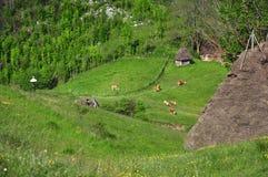 山的小农场 免版税库存照片