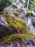 山的小植物 免版税库存图片