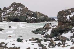 山的岩石在海湾的 俄罗斯的远东海岸的风景海水在海湾的春天 免版税库存图片