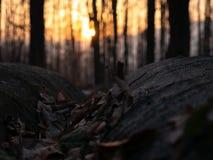 山的惊人和美丽的景色在落日的光芒的 库存图片