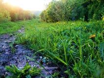 山的春天草甸 免版税库存图片