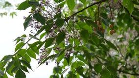 黑山的本质 植物,花,树 的adolphe 影视素材