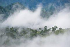 山的杉木森林在下雨与雾以后 免版税库存图片