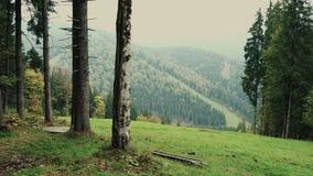 山的树木丛生的倾斜的看法环境美化与常青针叶树通过树 股票录像