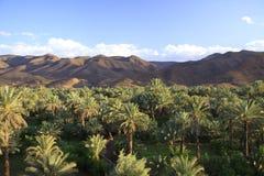 山的棕榈树丛 免版税库存图片