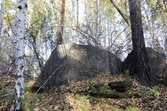 山的森林在一个晴天 特写镜头 免版税库存照片