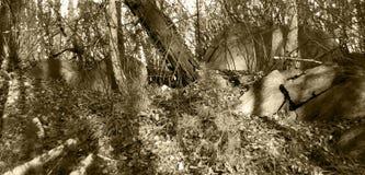 山的森林在一个晴天 特写镜头 库存照片
