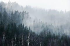 山的森林在雾 免版税库存照片