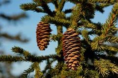 山的森林 树是完全地冷淡的 免版税库存图片