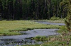 山的沼泽 免版税库存图片