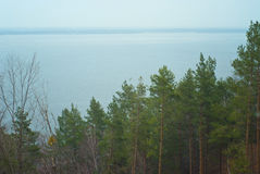 从山的看法到杉木森林 库存照片
