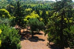 山的秀丽绿色森林 免版税库存图片