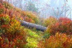 山的秋天森林 免版税图库摄影