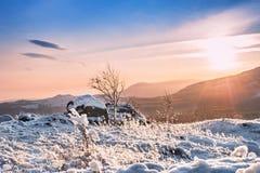 山的积雪的植物在日落 免版税库存照片