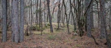 山的美丽的神仙的秋天森林 库存图片