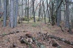 山的美丽的神仙的秋天森林 库存照片