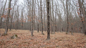 山的美丽的神仙的秋天森林 免版税库存照片