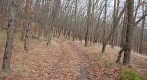 山的美丽的神仙的秋天森林 免版税库存图片