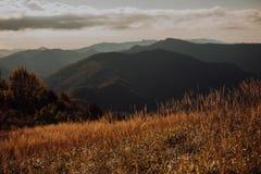 山的背景的绿色草甸 库存图片