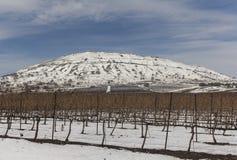 山的英尺的葡萄园在冬天 免版税库存图片