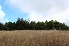 山的草甸在秋天 免版税库存图片