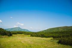 山的草甸 免版税库存照片