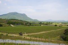 山的领域农场 免版税库存照片