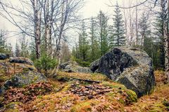 山的黑暗的阴沉的神秘的森林与在前景的巨大的岩石 树的石头、根和土地包括与 免版税库存照片