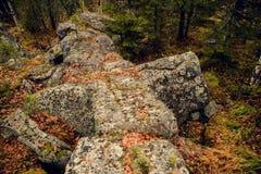 山的黑暗的阴沉的神秘的森林与在前景的巨大的岩石 树的石头、根和土地包括与 免版税库存图片