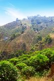 山的,土井美斯乐,清莱府,泰国茶园 库存图片