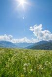 山的绿色草甸 免版税库存图片