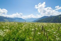 山的绿色草甸 库存图片