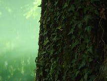 山的绿色 库存照片