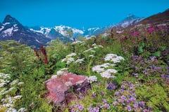 山的Dombai-Ulgen高山草甸 免版税库存照片