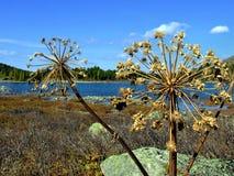 山的Forest湖。 库存图片