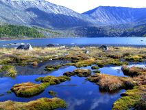 山的Forest湖。 免版税图库摄影